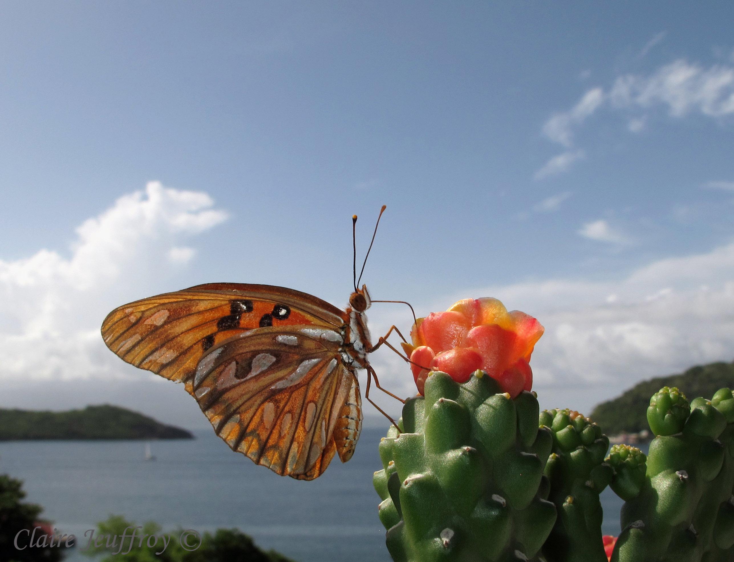 location les saintes Papillons 27 06 10 027