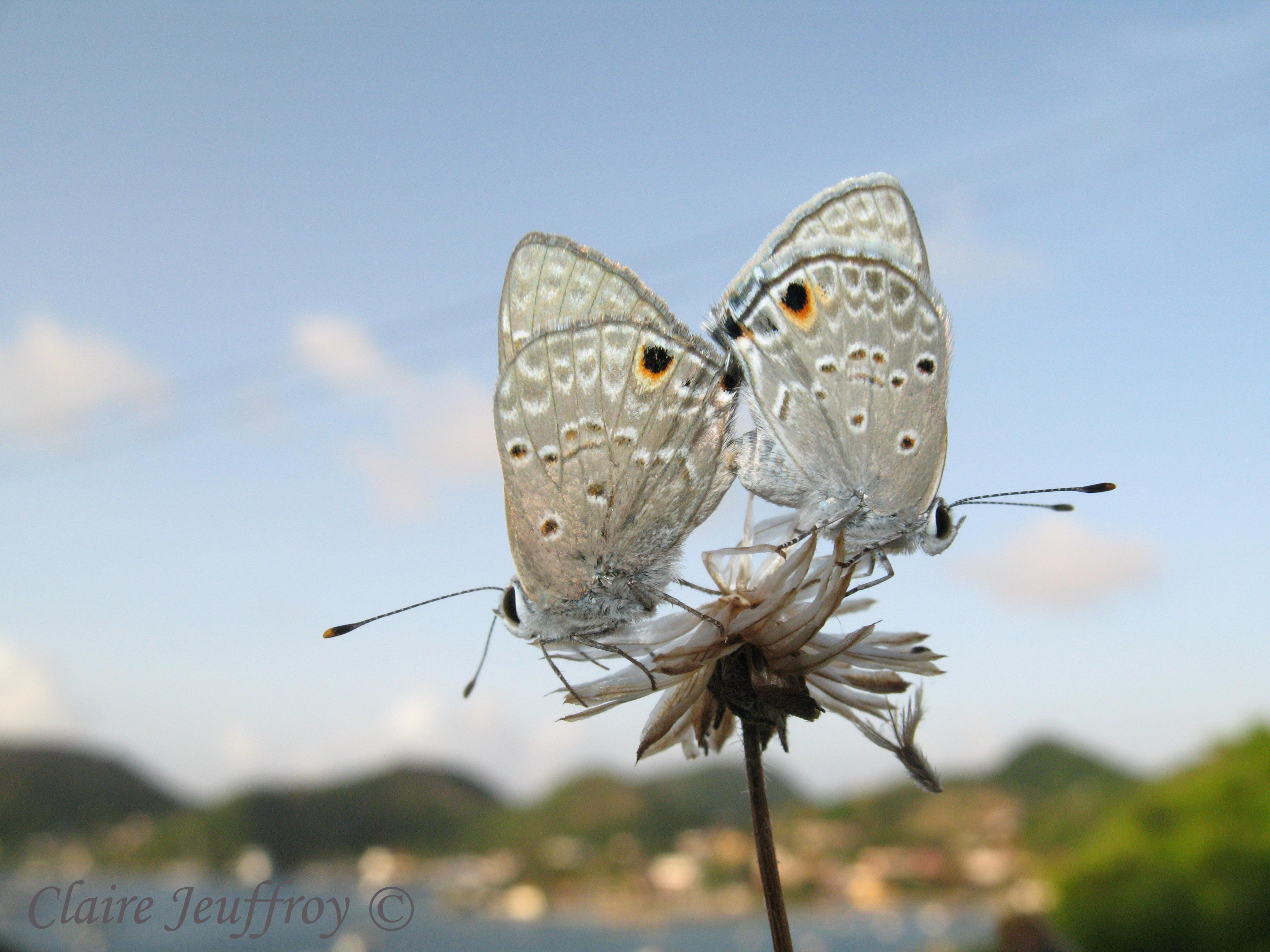 location touristique les saintes Papillons 24 06 09 108